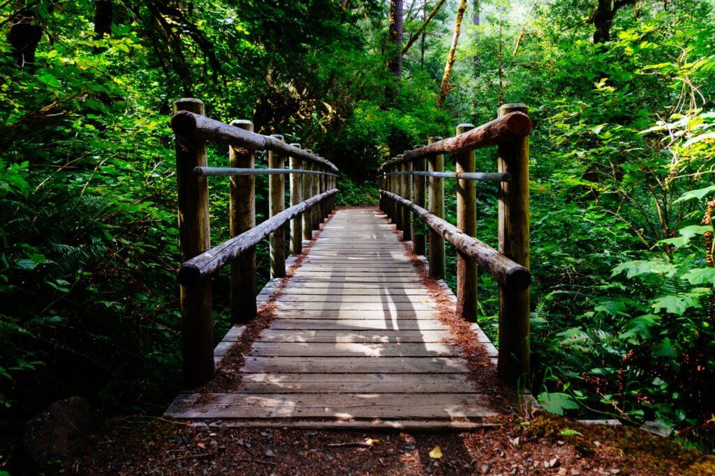 Ponte in mezzo al bosco